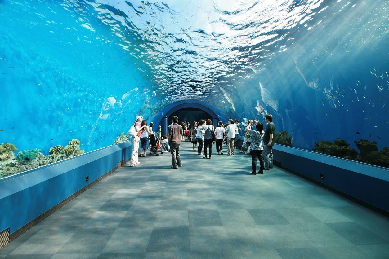 soirée d'entreprise dans un aquarium