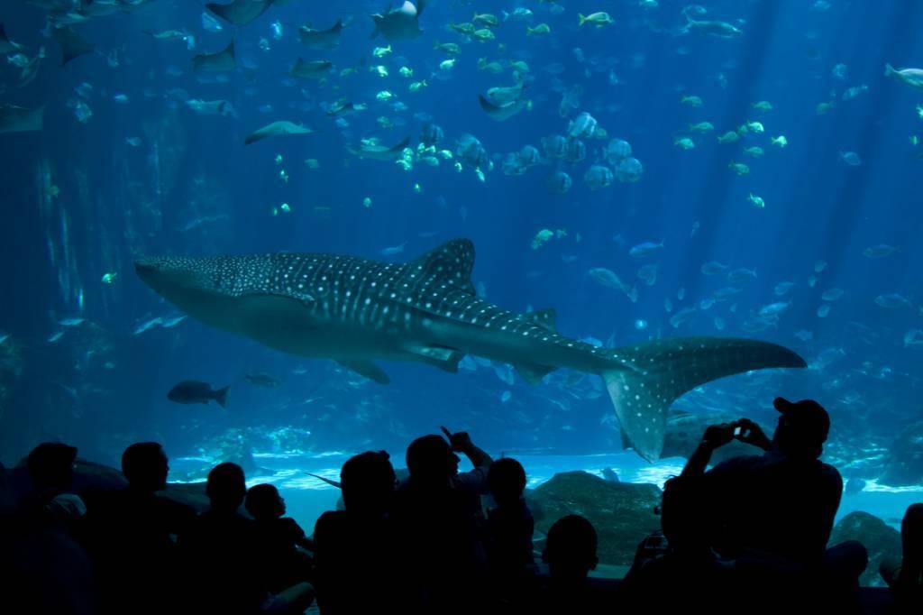 évènement d'entreprise dans un aquarium