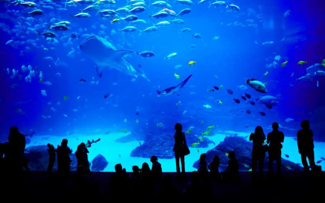Organiser une soirée d'entreprise dans un aquarium !